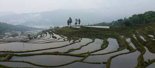 A misty morning at the Yuanyang rice terraces