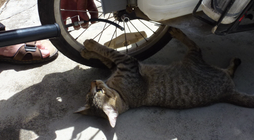 One of the cats at the Ideal Guesthouse helping Keith pump up the trailer tyre.
