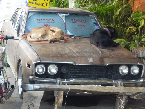 Let sleeping dogs lie...on an ancient car in Chiang Rai.