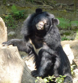 One of the residents at the bear rescue sanctuary.