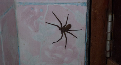 Sharing the en-suite with this spider wouldn't have been so bad except the walls didn't reach the ceiling so later in the evening Mr Spider came prancing boldly into the bedroom.