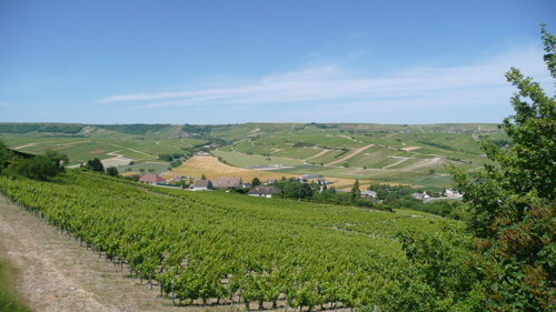 The vineyards of Sancerre.