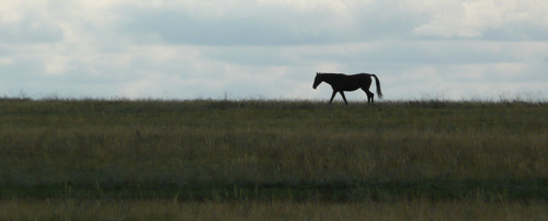 The desolate beauty of the steppe really appealed to me (Tamar).